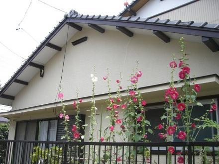 外壁塗装 弾性シリコン塗装【やねきハウスのリフォーム】(リフォーム後)